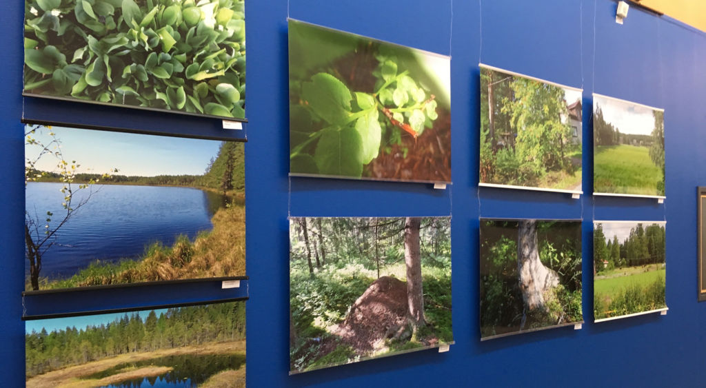 Luontoaiheisia valokuvia näyttelyssä.