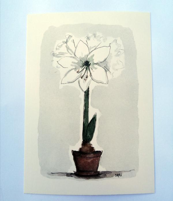 Sari´s ArtWork joulukortti, jossa valkoinen amaryllis ruukussa