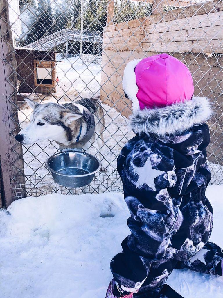 Tyttö juttelee koiralle, joka on aidan takana.