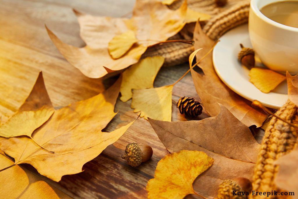 Keltaisia lehtiä on tippunut pöydälle, jolla on kuppi teetä.